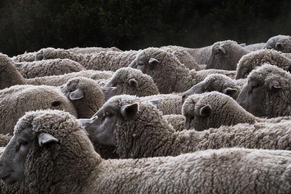 herding heuristic